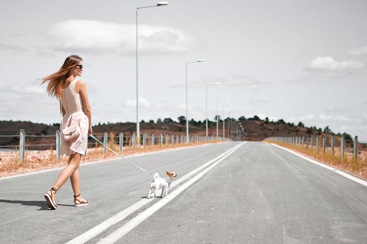 puppy_road